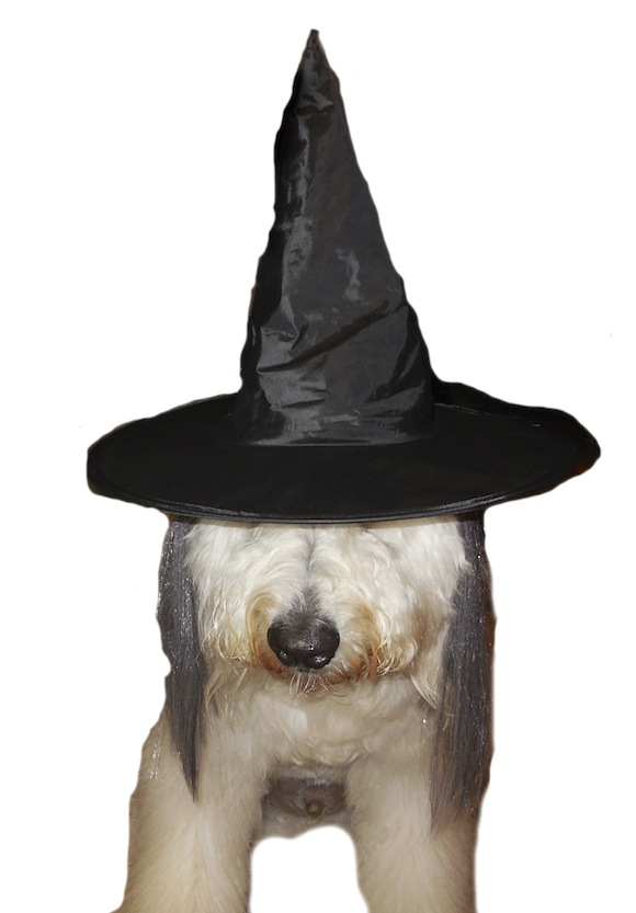 WITCH-A-DOODLE