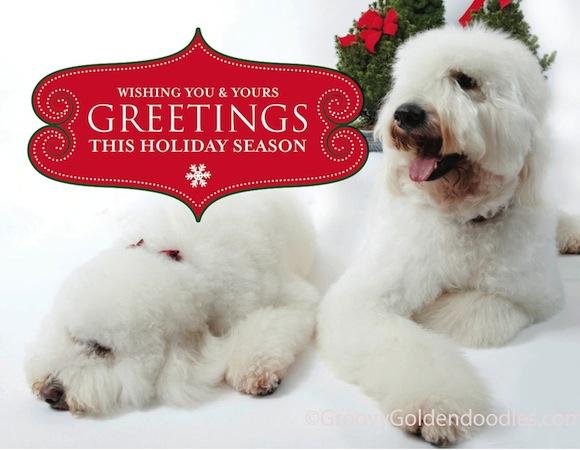 holiday_card_ggdb_v1_sample1-1 copy