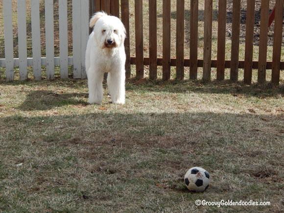 Look Wilson, it's really grass!!!