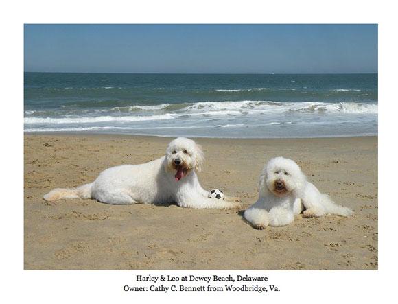 """The """"Beach Boys"""""""