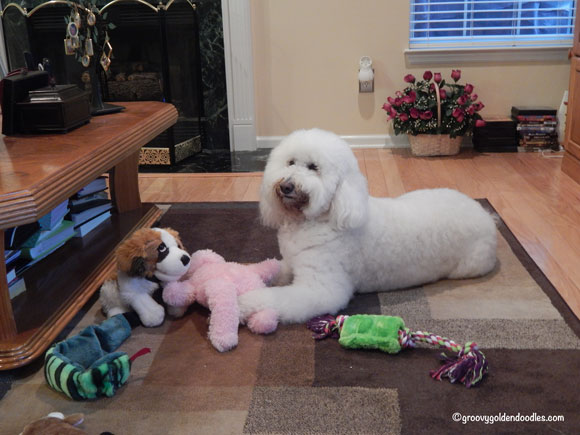 Harley knew that pink bunny wasn't his...