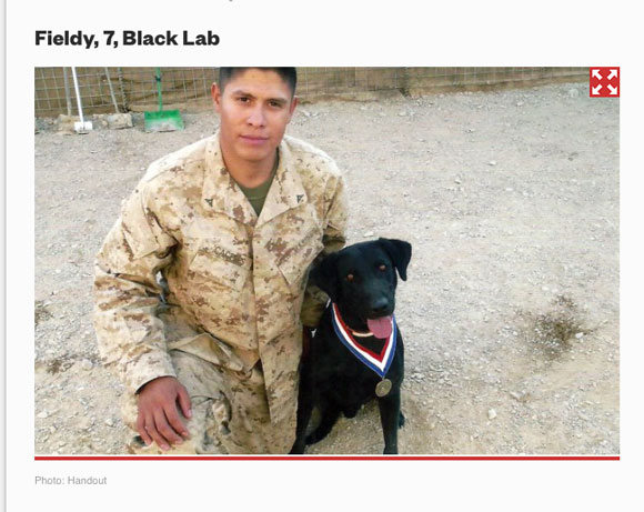 A contract working dog for four years in Afghanistan.
