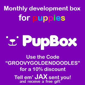 pupbox-banner-revised