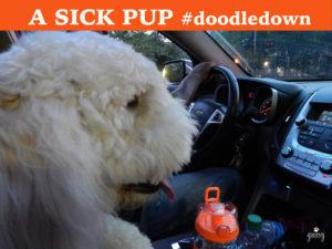 Car Sick Pup