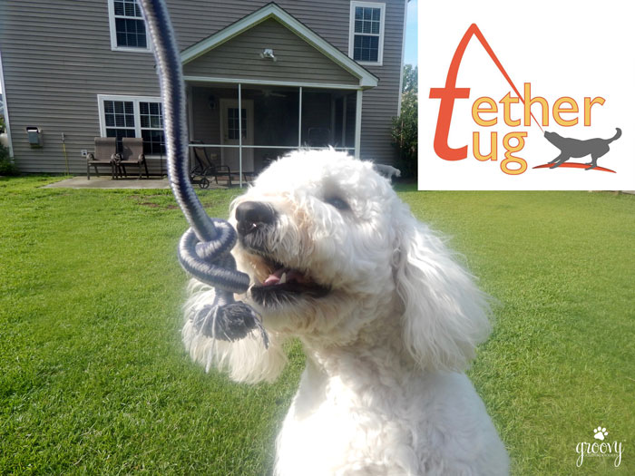 Tether Tug Dog Toy