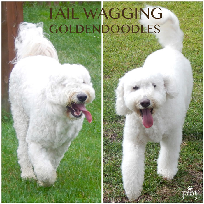 tail wagging 1