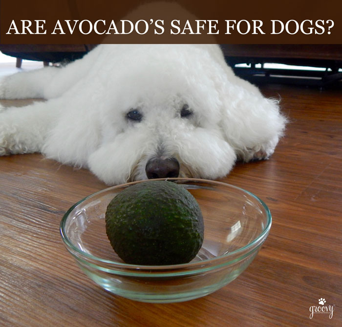 CAN DOGS EAT AVOCADO'S?