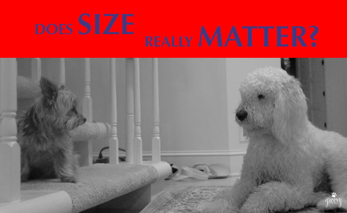 DOES SIZE MATTER BETWEEN DOGS!