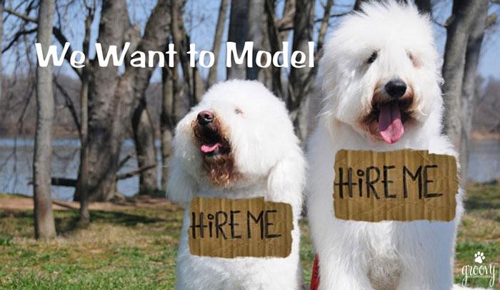 PET MODELING