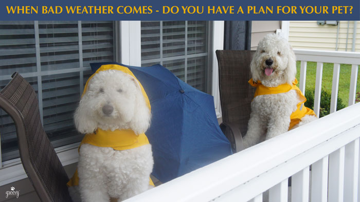 EMERGENCY READINESS PLANS FOR YOU AND YOUR DOGS