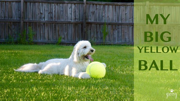 BIG YELLOW DOG BALL
