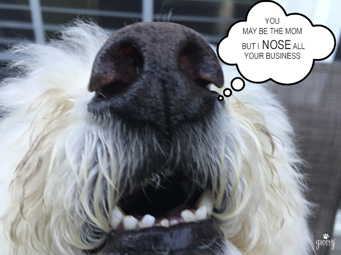 DOG NOSES KNOWS