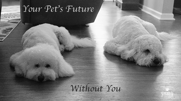 YOUR PETS FUTURE