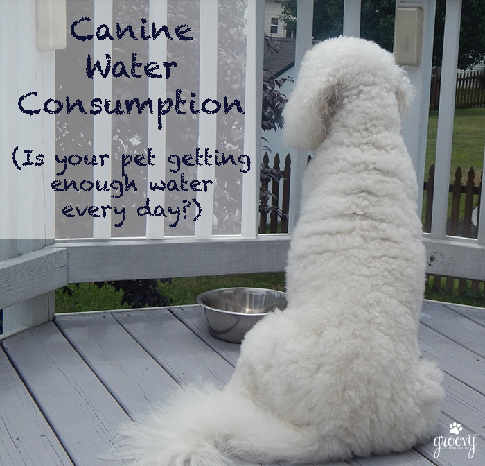 CANINE WATER CONSUMPTION