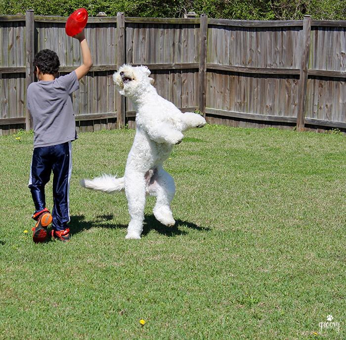 REINCARNATION - A DOGS PURPOSE