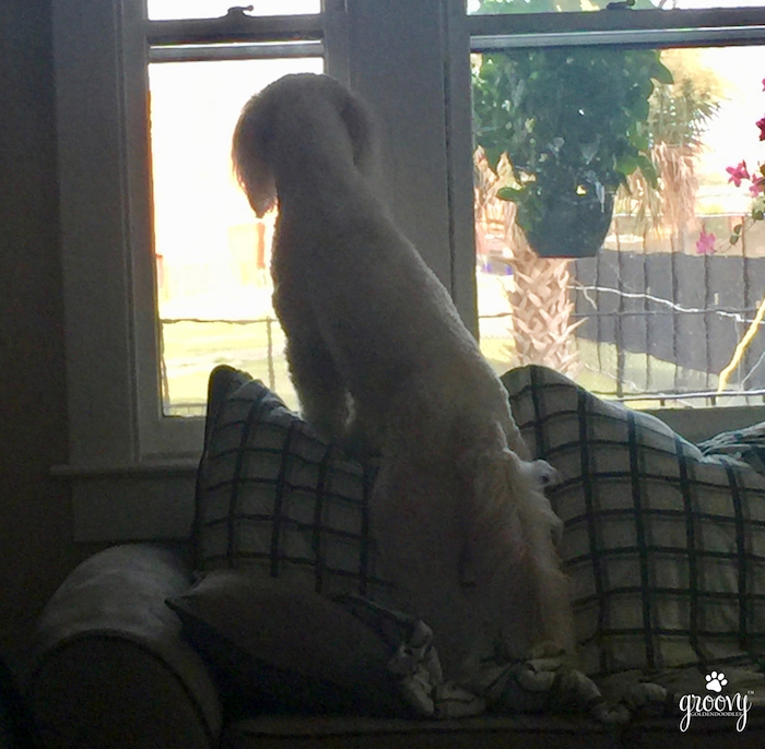 DOGS ROUTINE