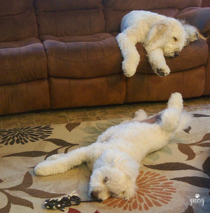 DOG TREATS ALL GONE?