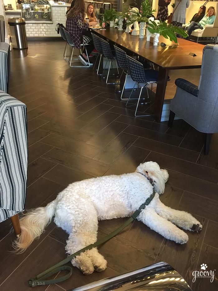 GRADUATE RICHMOND - PET FRIENDLY HOTEL