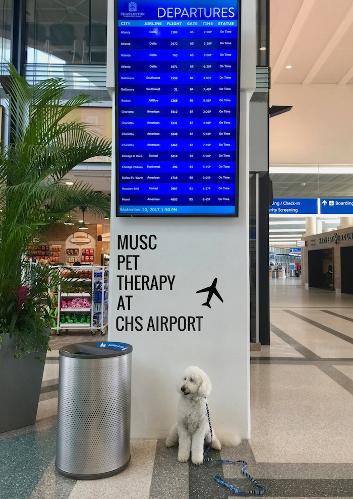 CHARLESTON SC AIRPORT USES THERAPY DOGS