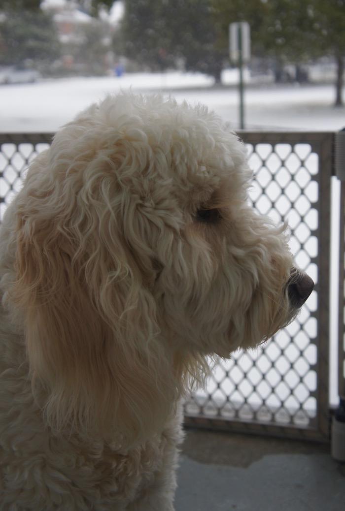 BIG HEAD DOG