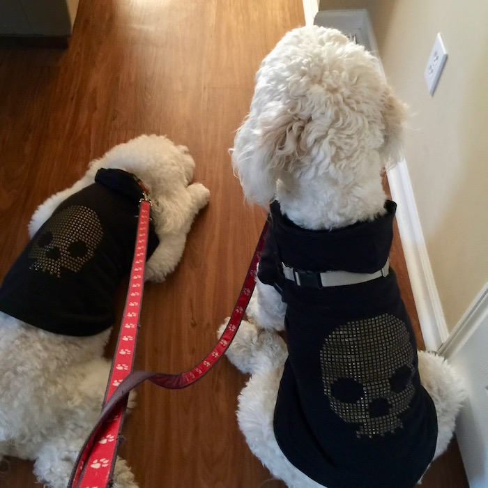 WINTER DOG WEAR
