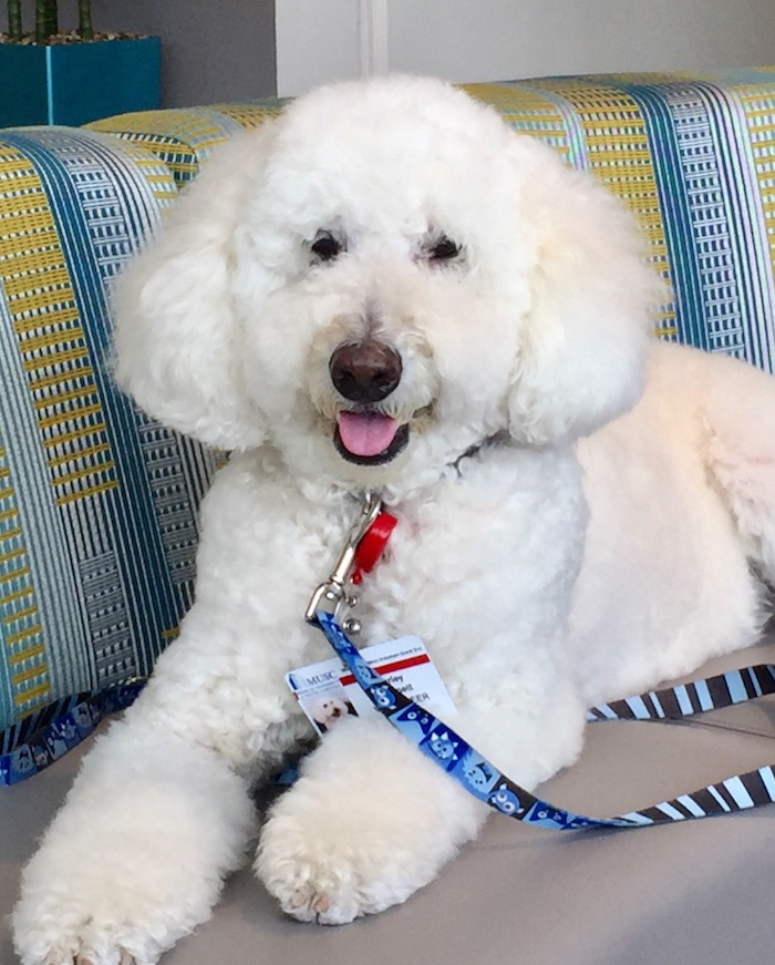 THERAPY DOGS HANDLING STRESS