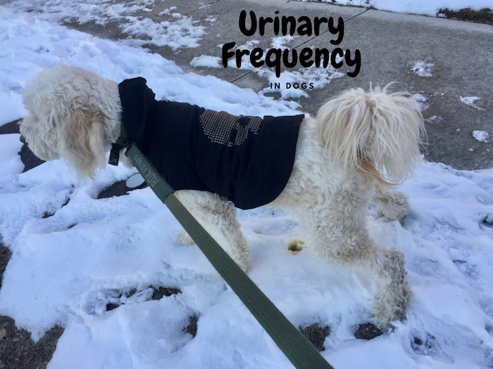 URINARY FREQUENCY IN DOGS