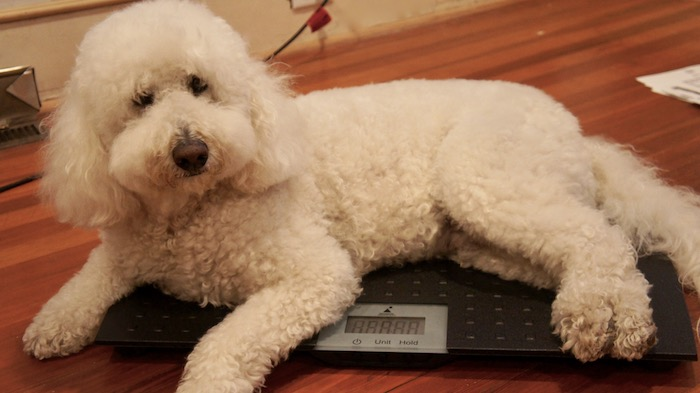 OWNING A PET SCALE