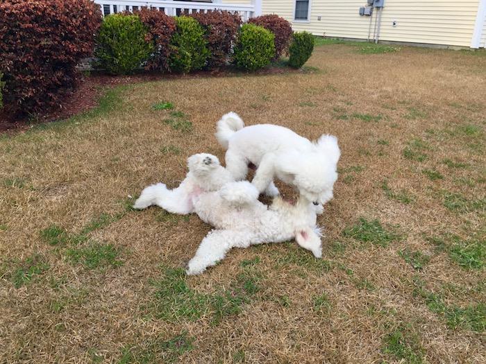 STUBBORN SENIOR DOGS