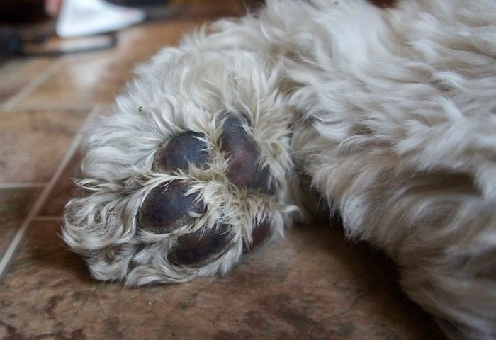 THE ANSWER IS IN THE PAWS #ORISIT?