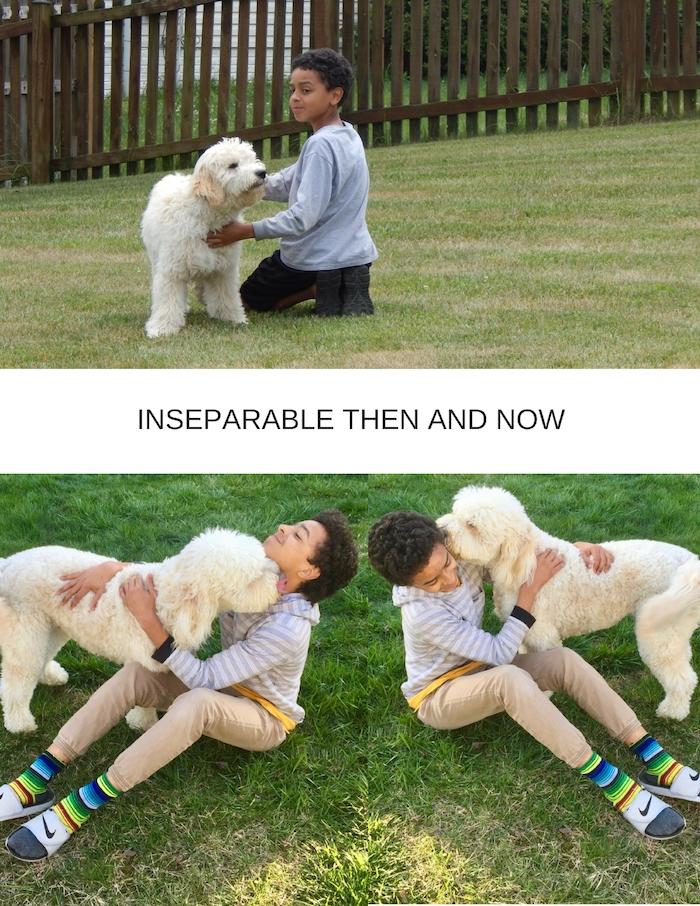 A DOGS EPISODIC MEMORY CAPABILITY