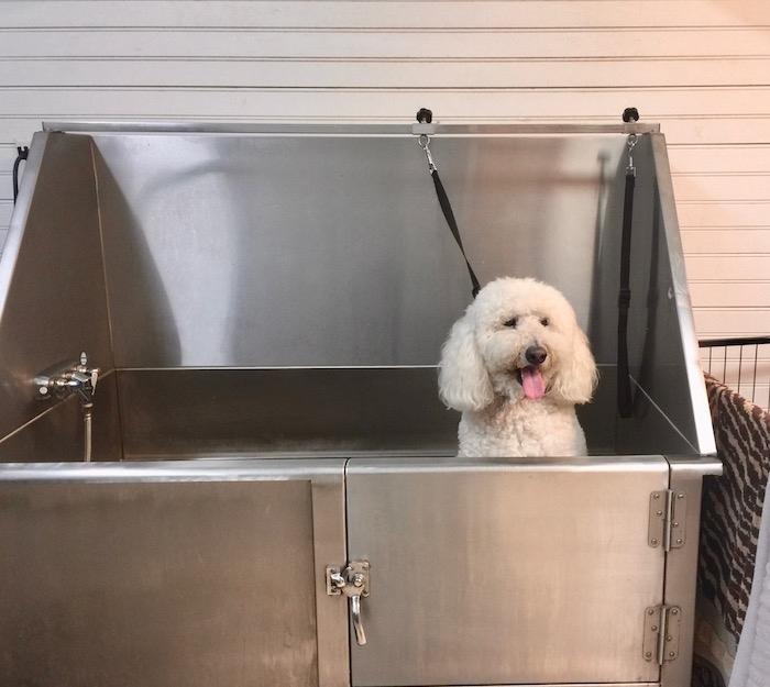 BATHING MY OWN DOGS