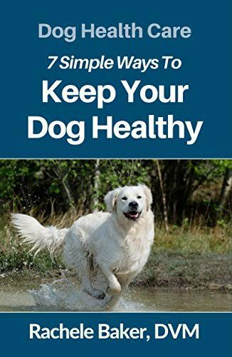 7 SIMPLE WAYS TO KEEP YOUR DOG HEALTHY