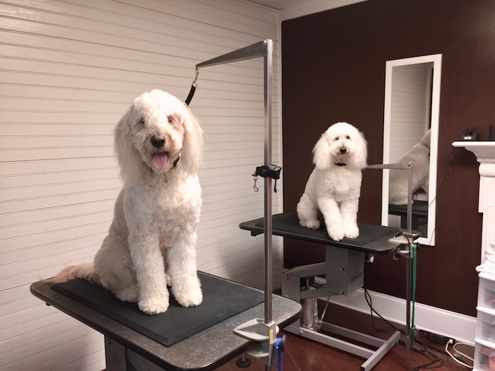 A PET GROOMERS WORLD