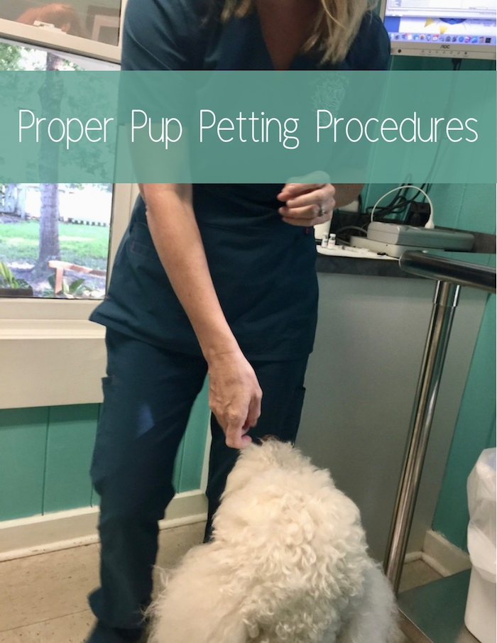 PROPER PUP PETTING PROCEDURES